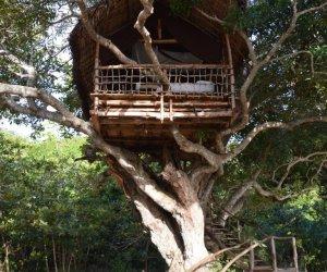 cabane-arbre.jpg
