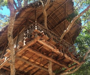 cabane-arbre2.jpg